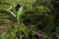Bro in - mellan risfält av Bali Arkivbild