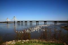 bro mississippi över floden Royaltyfri Foto