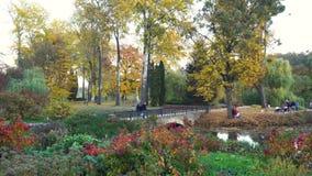 Bro och damm i färgrika Autumn Park stock video