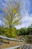 Bro och färgrik skog för höst Arkivfoto
