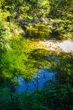 Bro på en flod abel nationell ny park tasman zealand Royaltyfria Bilder