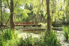 Bro på magnoliakolonin i charlestonen, SC Arkivbilder