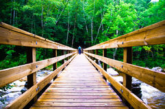 bro som korsar läskigt trä Royaltyfria Bilder
