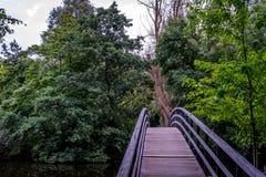 Bro till en skog på den Haagse bosen, skog i Haag Royaltyfri Bild