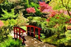 Bro till och med härliga japanska trädgårdar royaltyfri fotografi