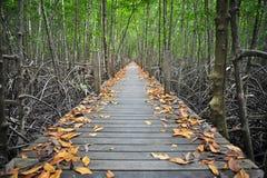 Bro till skogen Arkivbild