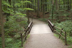 bro till trän Arkivbilder