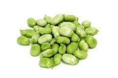 Broad bean Stock Image