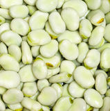 Broad bean Stock Photos