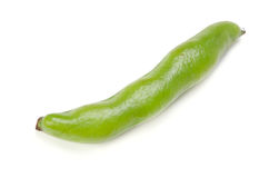 Broad bean Stock Photography