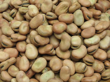 Broad bean background Royalty Free Stock Photo