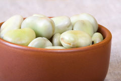 Broad bean. Stock Photography
