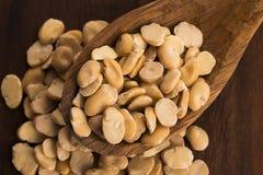 Broad bean dry Royalty Free Stock Photo