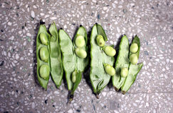 Broad bean, faba bean. Fava bean, Vicia faba, Cultivated herb with pinnate leaves, creamish-white flowers and few-seeded pods, young pods and young seeds used royalty free stock photo