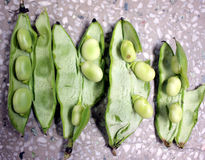 Broad bean, faba bean Stock Photography
