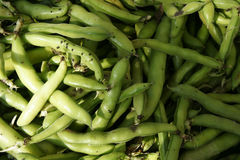 Broad bean, Faba bean Stock Image