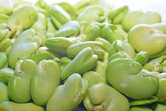 Broad bean. In pile for bright light Stock Image