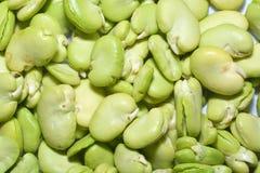 Broad bean Stock Photos