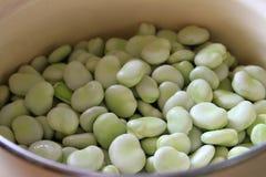 Broad bean Royalty Free Stock Photo