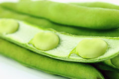 Broad bean pods and beans Royalty Free Stock Photography