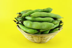 Broad bean pods and beans Stock Images
