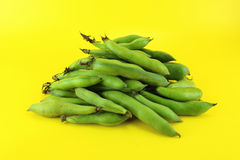 Broad bean pods and beans Royalty Free Stock Photo