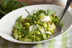 Broad bean salad Royalty Free Stock Photography