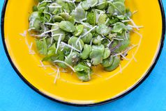 Broad bean salad with hard cheese. Royalty Free Stock Photography
