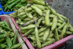 Broad bean Royalty Free Stock Images