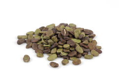 Broad Bean (Vicia faba, Fava Bean, Field Bean, Bell Bean or Tic Bean) Royalty Free Stock Photography