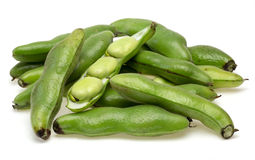 Broad bean in a white background Stock Image