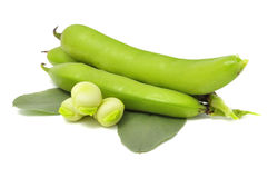 Free Broad Beans Stock Photography - 15203082