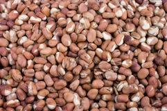 Broad beans Stock Photos