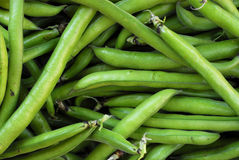 Free Broad Beans Royalty Free Stock Photo - 4788645