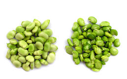 Free Broad Beans Stock Photography - 9136022