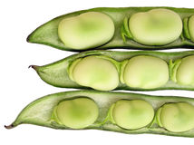 Free Broad Beans Stock Images - 9254914