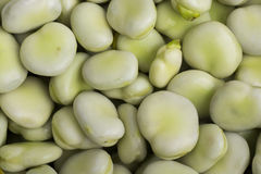 Broad beans. As a background Royalty Free Stock Photography