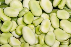 Broad beans. Close up view of some broad beans isolated on a white background royalty free stock photo
