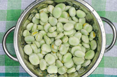 Broad beans. Closeup to fresh green broad beans Stock Photo