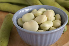 Broad Beans or Fava Beans Stock Image