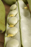 Broad Beans or Fava Beans Royalty Free Stock Image