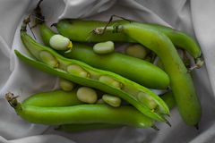 Broad beans fava Royalty Free Stock Images