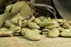 Broad beans from organic production in drying process Stock Image