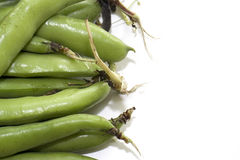 Broad beans 002. Produce sourced from farm. Studio photography Royalty Free Stock Image