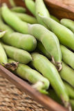 Broad beans Stock Image