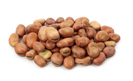Broad or fava beans Stock Photography