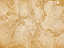 Broad Leaf Imprint. Vintage style paper with imprint of leaves royalty free stock photos