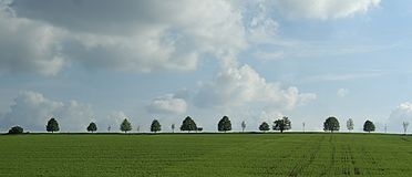 Broad leaf tree avenue on a horizon behind green agriculture field in the spring. Countryside landscape, trees, sunlight,blue sky, white and dark clouds. South stock photography