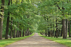 Broad Oak Alley in the old park Stock Image