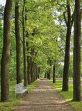 Broad Oak Alley in an old park Royalty Free Stock Photo